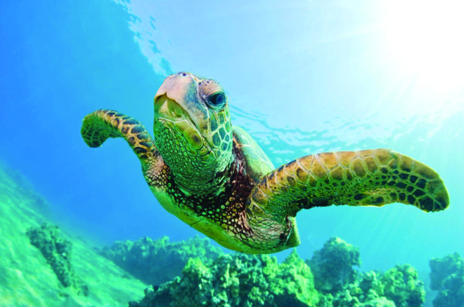 Turtle Canyon Snorkel Cruise by Catamaran