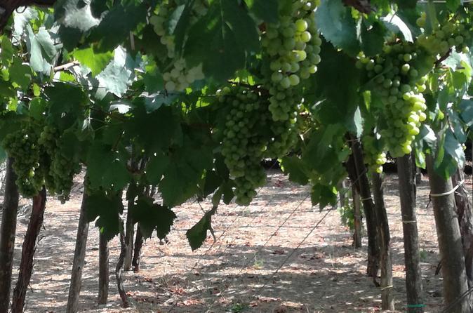 Private Tour Sorrento Winery Naples