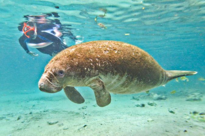 Snorkel com peixes-boi no Rio Crystal e Tour de aerobarco em Everglades