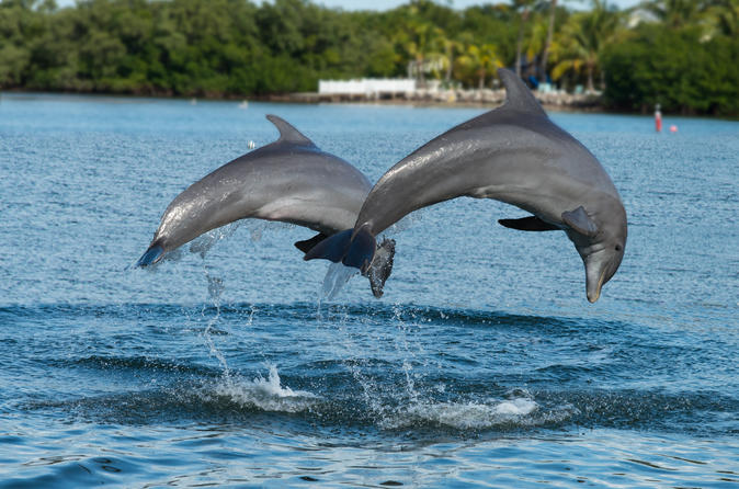 Viagem de um dia pela praia em Clearwater partindo de Orlando com Cruzeiro de encontro com golfinhos