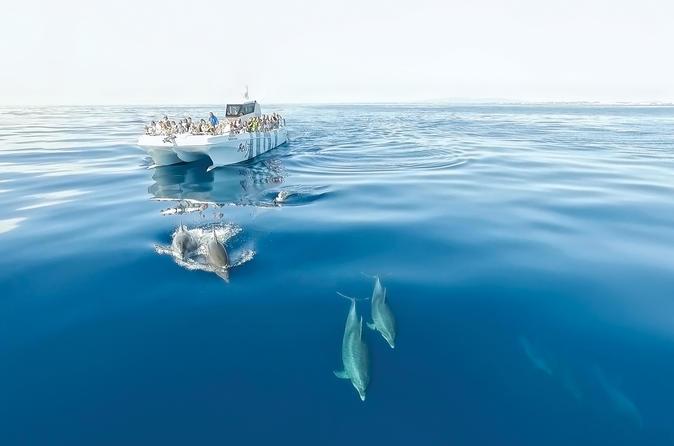 Cruzeiro de observação golfinhos de meio dia em Algarve, saindo de Albufeira, com almoço com churrasco na praia