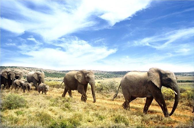 Full-Day Addo Elephant National Park Safari From Port Elizabeth