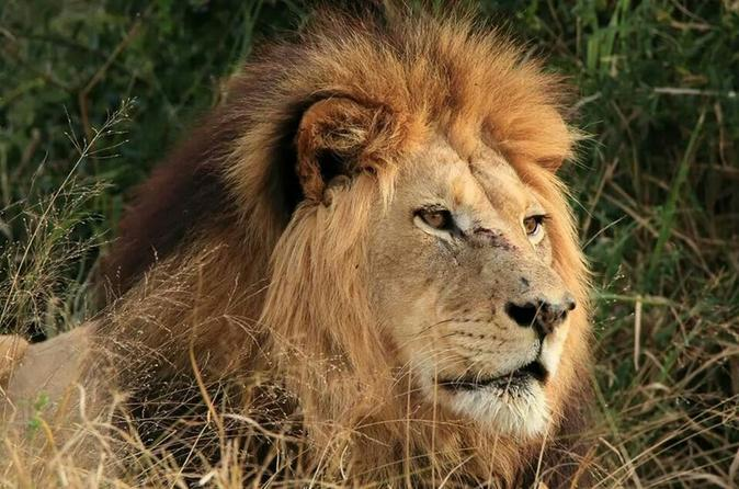 Port Elizabeth Shore Excursion: Full-Day Addo Elephant National Park Safari