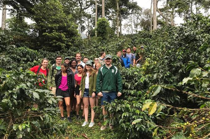 coffee express & exotic fruit Market Medellin