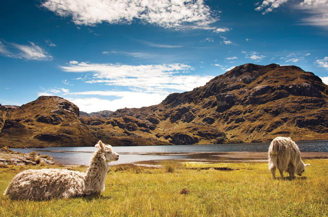 Private tour to cajas national park including cloud forest hike in cuenca 373187
