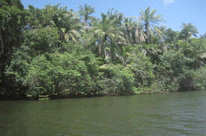 Excursão Privada de Barco pela Floresta à Reserva Natural de Sapiranga, partindo de Abrantes