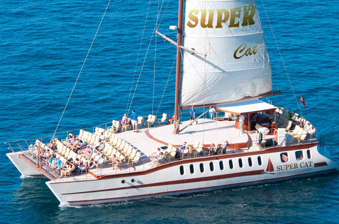 Dolphin and whales watching aboard the Supercat