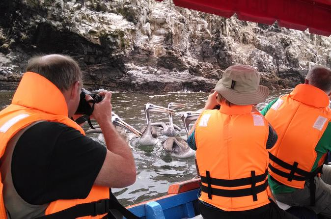 Half-Day Tour Pucusana Fishing Village and Wildlife from Lima