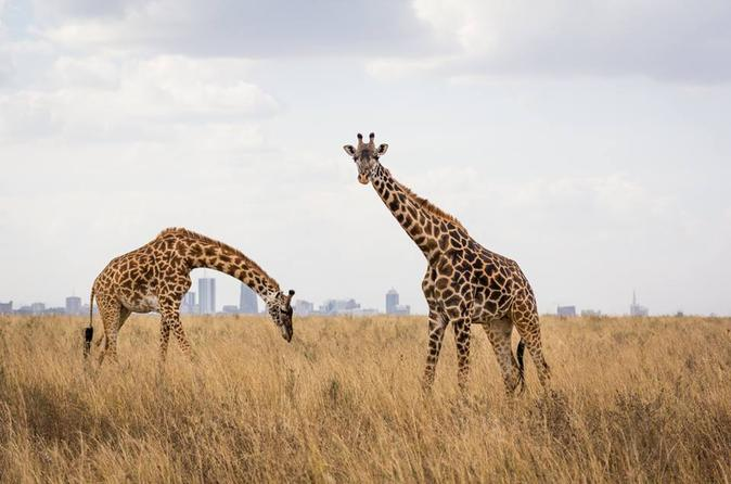 1 Day Glimpse of Wildlife Nairobi Tour