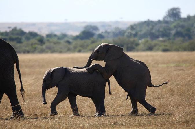3-Day Amboseli National Reserve Safari from Nairobi