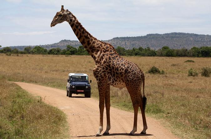 3-Day Sweetwaters: Ol Pejeta Conservancy Safari from Nairobi