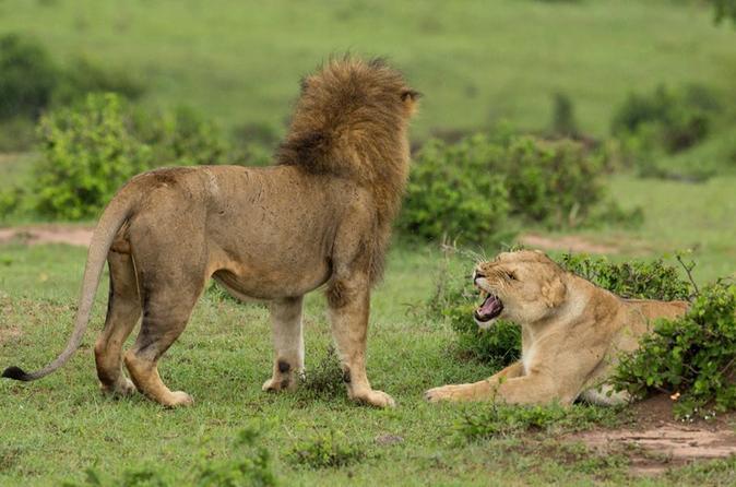 4-Day Maasai Mara and Lake Nakuru Safari from Nairobi