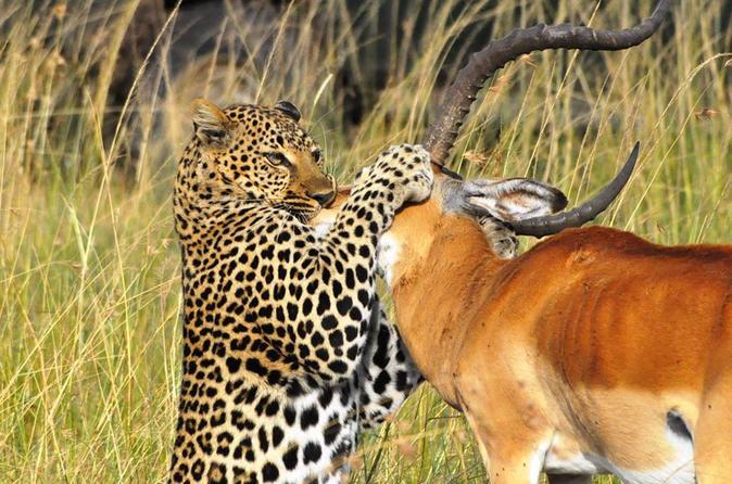 5-Day Masai Mara Lake Nakuru and Lake Naivasha Safari