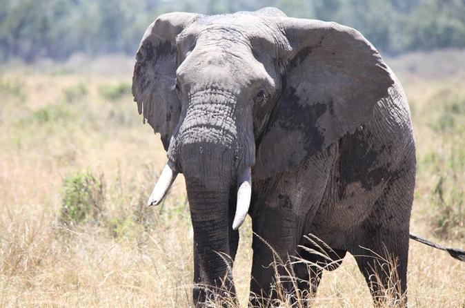 6-Days Samburu Lake Nakuru and Masai Mara Safari