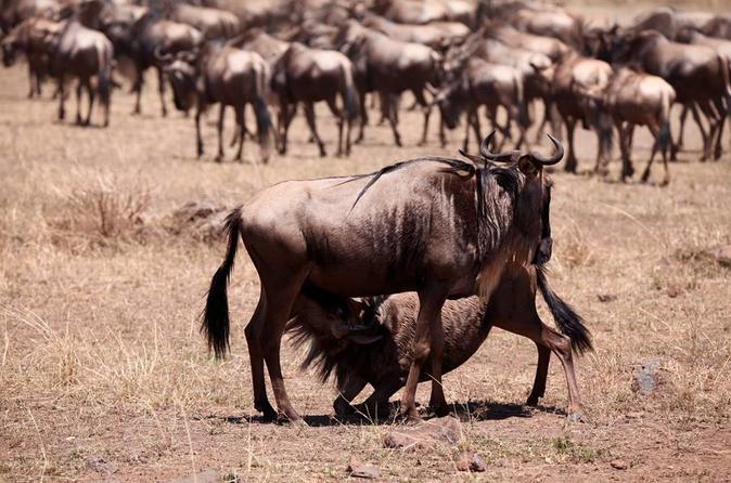 8-Day The Best of Kenya Ultimate Safari