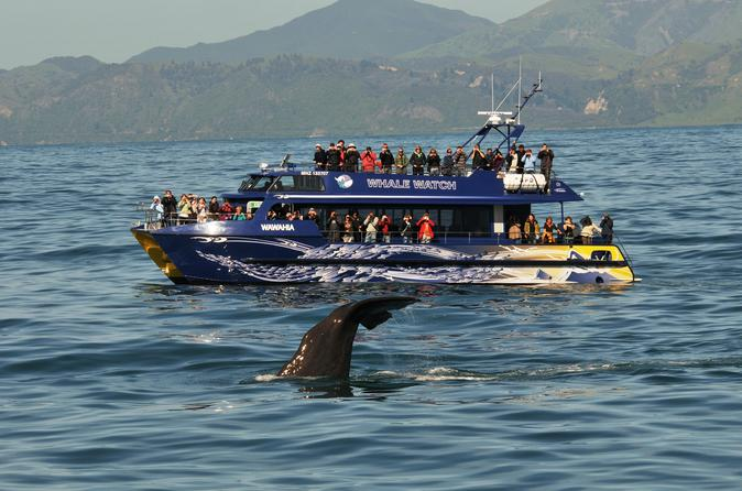 Full-Day Kaikoura Tour from Christchurch New Zealand, Pacific Ocean and Australia