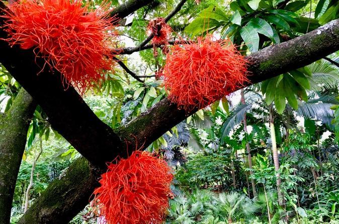 Botanical Gardens and Medellin City walking Tour