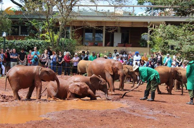 Giraffe Centre and David Sheldrick Half Day Tour
