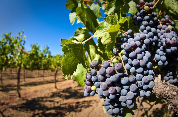 Gattinara wine tasting in historic wine cellar from arona in lake maggiore 299165
