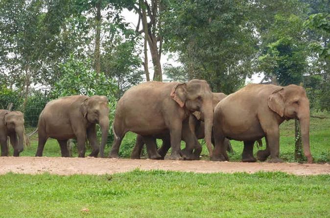 Private tour kuala gandah elephant sanctuary and batu caves tour from in kuala lumpur 363145