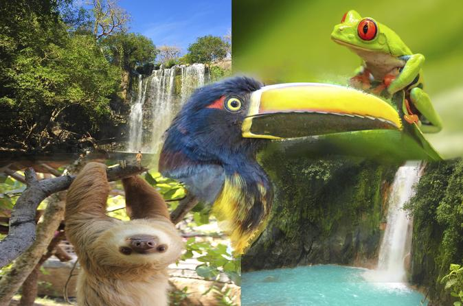 4 IN 1 SLOTH WATER FALLS RAIN FOREST VOLCANOES - Liberia