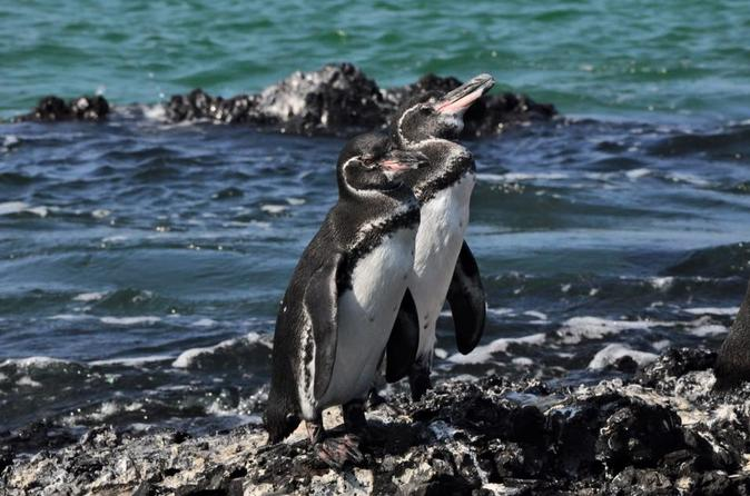galapagos island hopping all inclusive 6 day adventure 2019