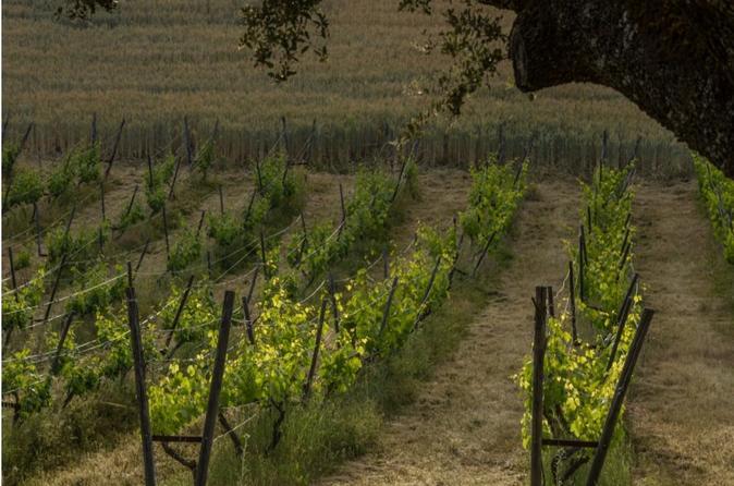 Marbella Private Wine Tasting and Tapas in Wine Cellar in Ronda Spain, Europe