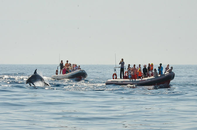 Dolphin watching and caves trip from albufeira in albufeira 291422
