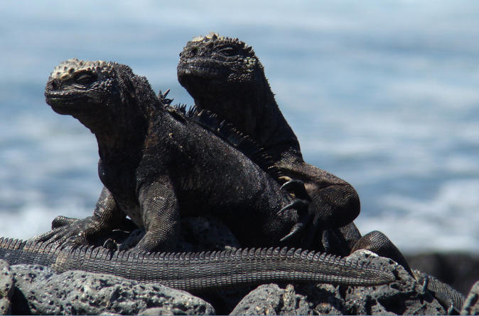 4-Day Galapagos Tour
