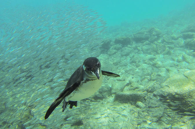 Full-Day Pinzon Island Snorkling, Fishing and La Fe Excursion Including Lunch
