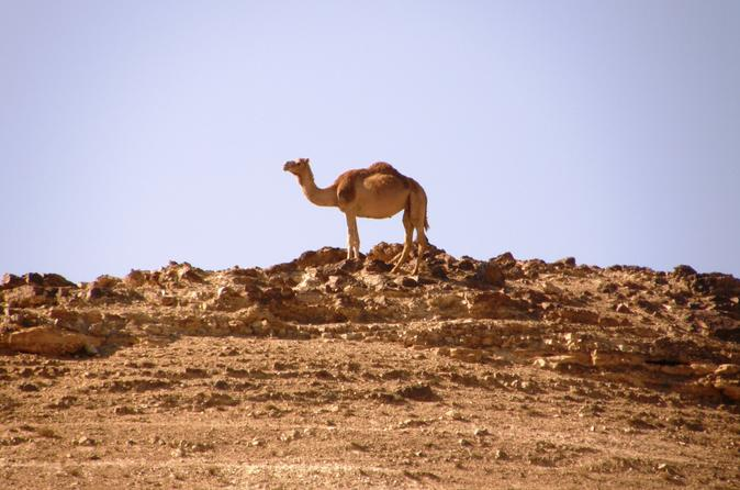 Wonders of Negev Mountains Private Tour from Tel Aviv