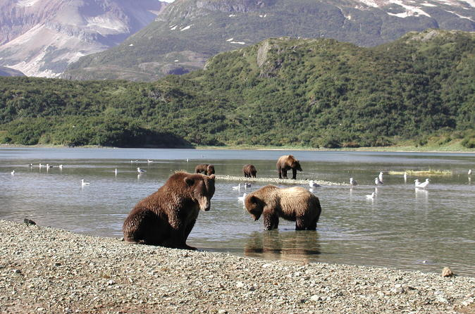 Helicopter bear viewing safari to the alaska peninsula in homer 294783