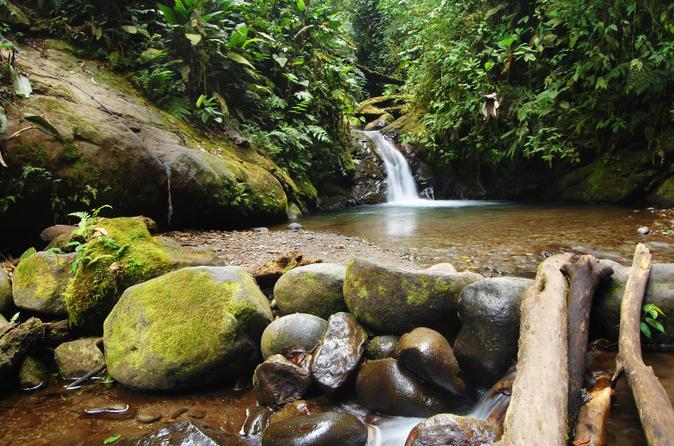 Excursão privada: Reserva de Floresta de Neblina Mindo Nambillo do Quito