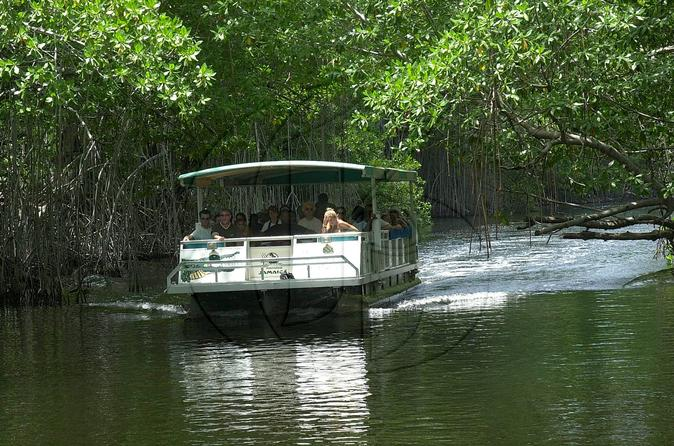 Black River Safari and YS Falls Tour from Montego Bay