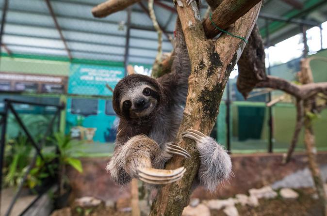 Gamboa Rainforest Combo Pack From Panama City