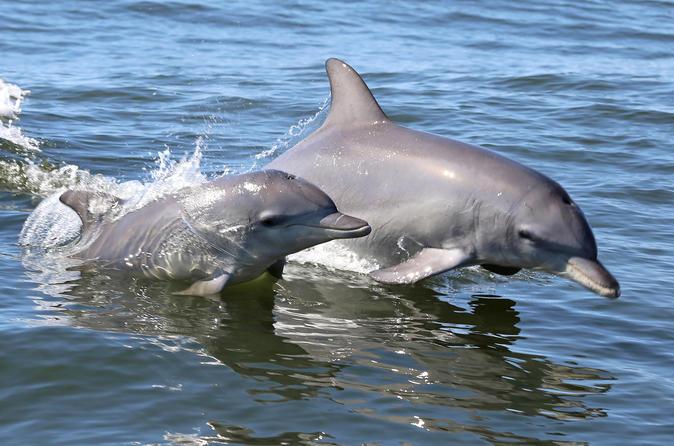 Mandurah Coastal Tour with Dolphin Adventure Cruise