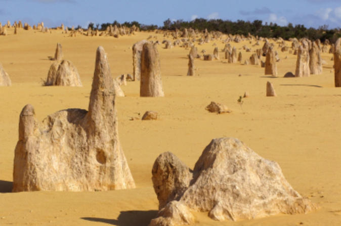 Pinnacles Desert, Koalas and Sandboarding 4WD Day Tour from Perth