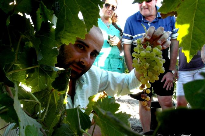 Sherry wine tour in jerez in c diz 298933