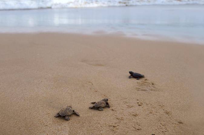 Sea turtle release in puerto escondido in puerto escondido 300437