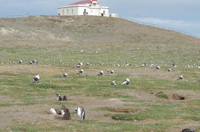 Marta Island, Magdalena Island and Punta Arenas City Tour
