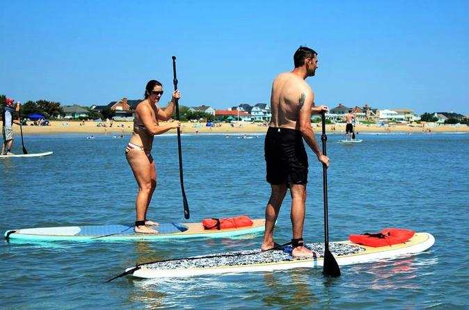 Dolphin stand up paddleboard down wind eco tour in virginia beach 300478