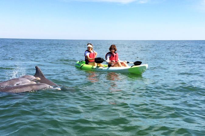 Small group dolphin kayak eco tour in virginia beach 299895
