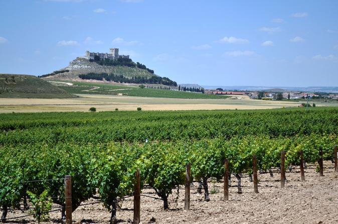 Premium Ribera del Duero wine tour with lunch & hotel pick-up