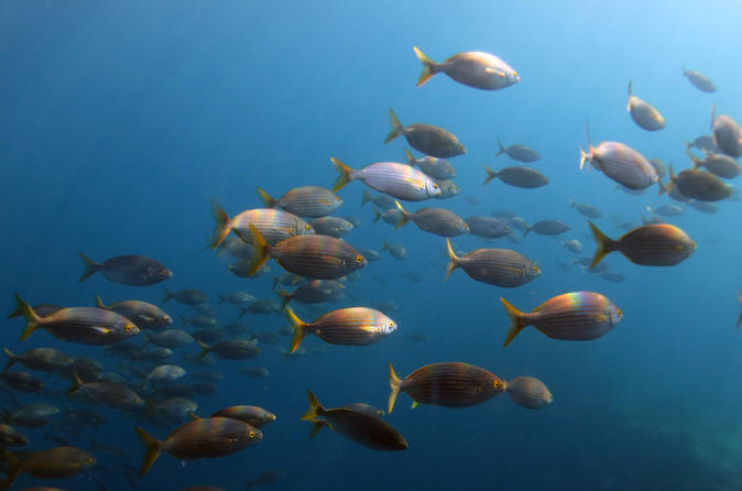 Marine reserve diving in gran canaria in maspalomas 299890
