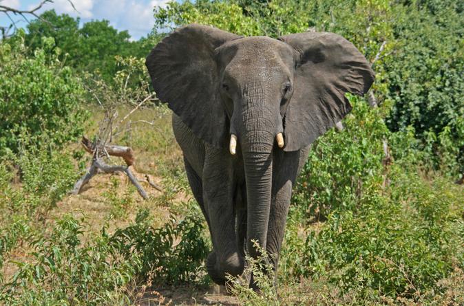 Excursão de 5 dias por Victoria Falls e Parque Nacional Chobe com voo de ida e volta de Joanesburgo