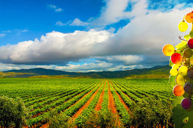 Guadalupe valley wine route tour in baja california in ensenada 315593