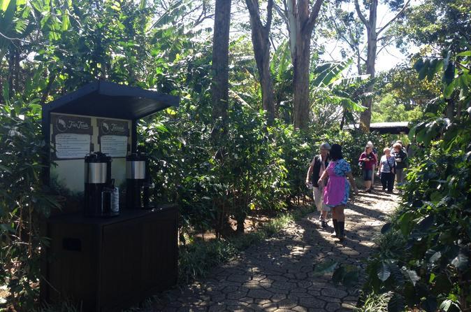 Diamante Coffee Tour from San José