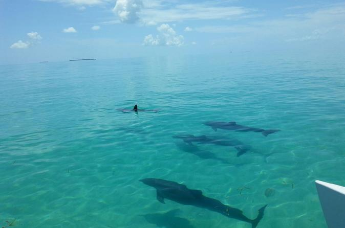 Key West Shore Excursion: Shipwreck Snorkel and Wild Dolphin Encounter
