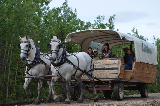 Draft horse drawn covered wagon tour with back country dining in healy 302729