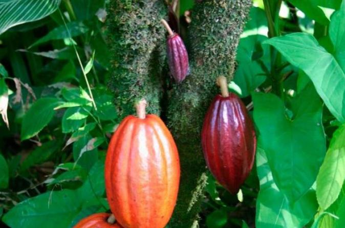 Chocolate tour and cahuita national park from limon in limon 330642